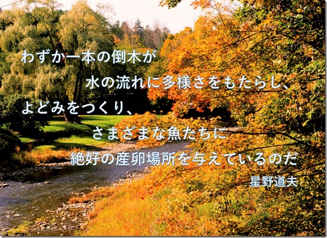 hoshino-michio-quote-only-single-tree