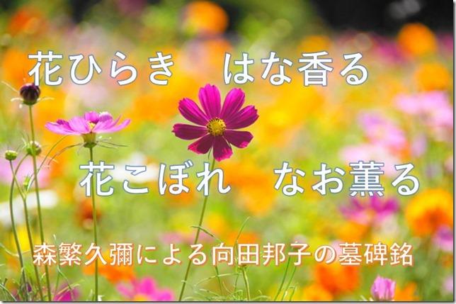 quotes-080_morishige-mukouda